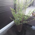 【DIYガーデニング】植栽~シマトネリコとシャラの木と芝張り準備【新築シンボルツリー】
