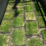 【DIYガーデニング】芝の成長記録 Part1 初日~15日目【初めての芝張り】