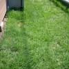 【芝生のお手入れ】2年目で早くも芝生が上手く育たなかった原因を探る